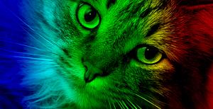 barevna